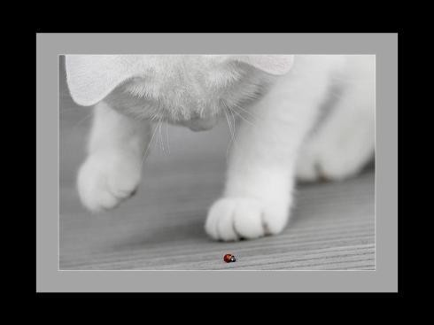 chaton et coccinelle