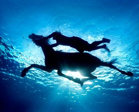 cheval sous l'eau