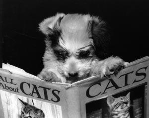 chien livre cats