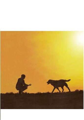 chien rencontre canine